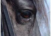 Puzzles oeil de cheval (frison)