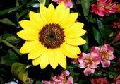 Puzzle gratuit jaune soleil