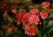 Puzzle gratuit belle fleur de rocaille