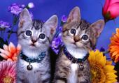 Puzzle Puzzle chatons