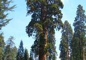Jeu puzzle sequoia