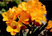Jeux de puzzle : quelle belle fleur