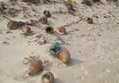 Puzzle plage de tunis