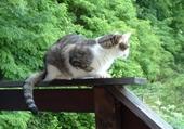 Mon beau chat