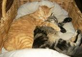 Jeux de puzzle : sieste des chats