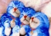 Puzzle mignon chats