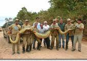 Puzzle en ligne serpent