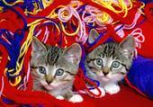 Jeux de puzzle : chats