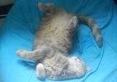 La dure vie d'un chat