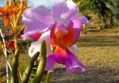 Jeu puzzle jolie fleurs