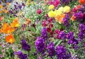 Jeux de puzzle : festival de fleurs