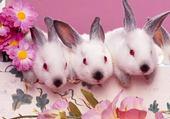 Jeu puzzle Les lapins