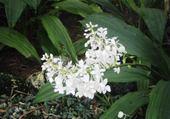 Puzzle gratuit orchidée sauvage
