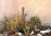 Jeux de puzzle : plantes grasses