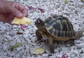 Bellou la tortue
