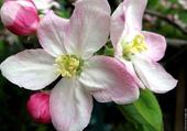 Puzzle en ligne fleur