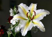 Puzzle fleur de lys