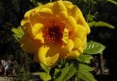 Jeux de puzzle : Fleur de Grece