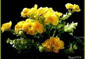 Puzzle en ligne begonia