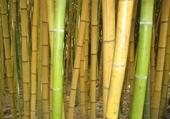 Puzzle bambous géants anduze