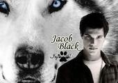 Puzzle Jacob Black