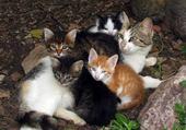 les chat