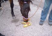 Puzzle cheval**