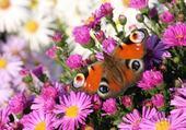 Puzzle en ligne fleurs