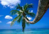 Jeux de puzzle : palmier