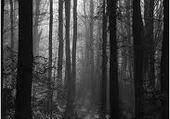 Jeu puzzle forêt noir