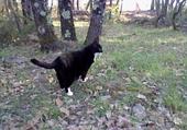 Puzzle mon chat svp essayez le ;)