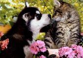 Puzzle Le chat avec un chien