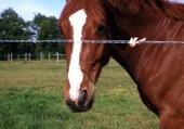 Puzzle cheval dans le pré