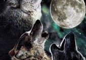 Puzzle loup