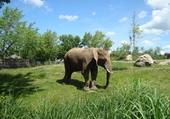 Puzzle Puzzles un éléphant au zoo