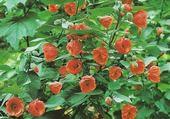 Puzzles buisson de fleurs