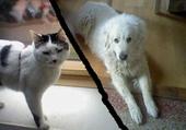 Jeux de puzzle : Mon chat Logan et ma chienne Wani