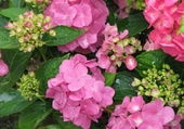 Jeu puzzle Fleurs d'été