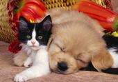 Puzzle Puzzle chien et chat