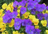 Puzzle en ligne autres fleurs