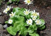 Puzzle en ligne fleurettes