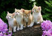 Puzzle gratuit  chatons