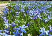 Jeux de puzzle : fleurs bleues