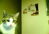 Puzzle mon petit chat