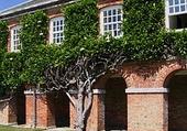 Puzzle Puzzle magnolia palisse