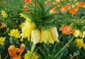 Puzzle fleur exotique