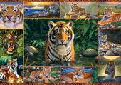 Puzzle merveilleux tigre