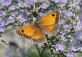 Puzzle Jeu puzzle papillon