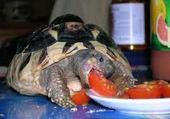 Puzzles tortue