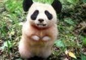 Puzzle hamster panda